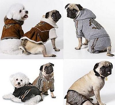 39902 modelos de roupas para cachorro Roupas para cachorros   Modelos, preços, onde comprar