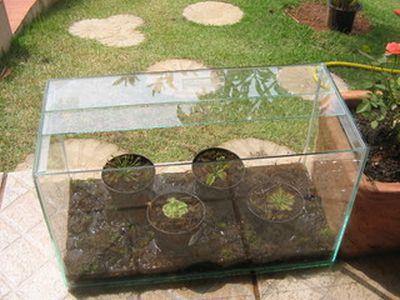 399359 como fazer uma estufa para plantas 1 Como fazer uma estufa para plantas