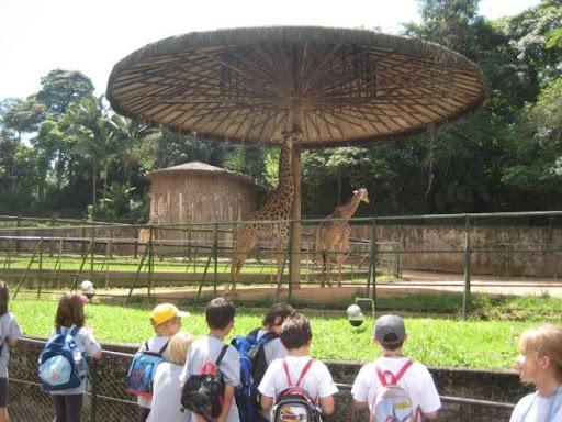 400056 s2 Zoológico de São Paulo   atrações, endereço