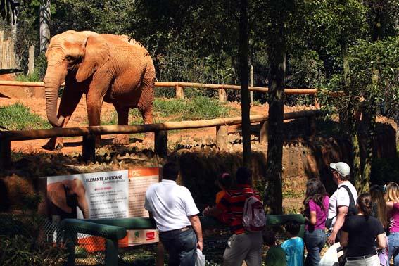 400056 zoologico caiopimenta spturis1 Zoológico de São Paulo   atrações, endereço
