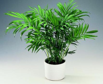 401059 Plantas indicadas para ambientes fechados 1 Plantas indicadas para ambientes fechados