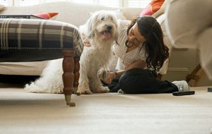 Como cuidar de cachorro em apartamento