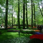403984 Keukenhof Holanda jardim 150x150 Jardins mais famosos do mundo: fotos