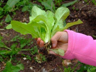 404859 Como fazer uma horta para crianças 2 Como fazer uma horta para crianças