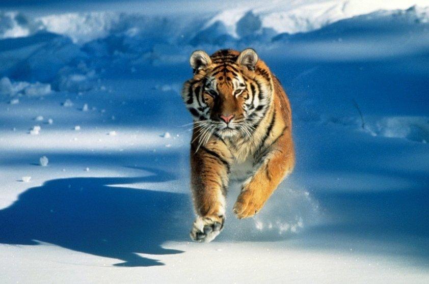 Animais ameaçados de extinção: fotos
