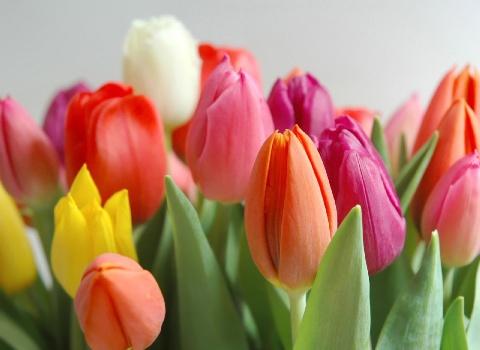 405444 Flores indicadas para outono inverno 2 Flores indicadas para outono inverno