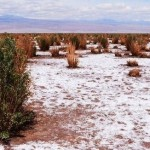 406136 Depois da chuva no atacama 150x150 Paisagens de deserto: fotos
