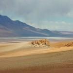406136 Salta San Pedro Atacama 150x150 Paisagens de deserto: fotos