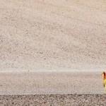 406136 Vicuña animal típico dos Andes. AtaCAMA 150x150 Paisagens de deserto: fotos