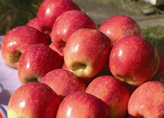 406635 A maçã possui uma substância chamada pectina que forma uma geléia no intestino que estimula o seu funcionamento. Sucos que ajudam no funcionamento do intestino
