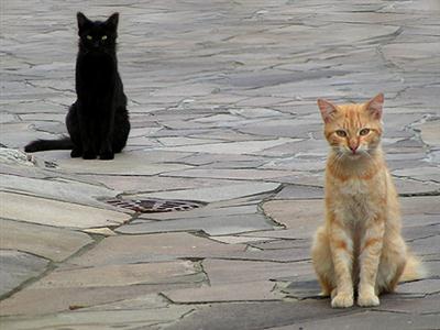 406933 Adoção de gatos – dicas cuidados1 Adoção de gatos: dicas, cuidados
