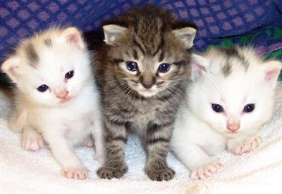 406933 Adoção de gatos – dicas cuidados2 Adoção de gatos: dicas, cuidados