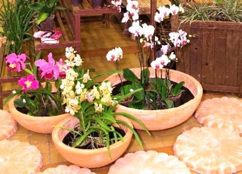 407792 Como cultivar orquídeas em casa dicas Como cultivar orquídeas em casa: dicas