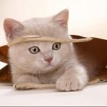 407844 101 150x150 Gatos: fotos engraçadas