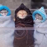 407844 30 150x150 Gatos: fotos engraçadas