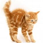 407844 71 150x150 Gatos: fotos engraçadas