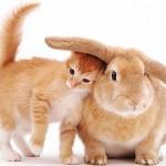 407844 75 150x150 Gatos: fotos engraçadas