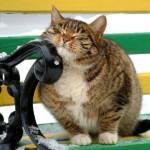 407844 8 150x150 Gatos: fotos engraçadas