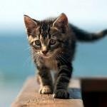 407844 90 150x150 Gatos: fotos engraçadas