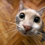 407844 99 150x150 Gatos: fotos engraçadas