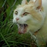 407844 Imagens engraçadas de gatos 65 17 150x150 Gatos: fotos engraçadas
