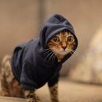 407844 Imagens engraçadas de gatos 65 4 150x150 Gatos: fotos engraçadas