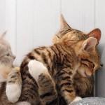 407844 Imagens engraçadas de gatos 65 60 150x150 Gatos: fotos engraçadas