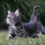407844 Imagens engraçadas de gatos 65 9 150x150 Gatos: fotos engraçadas