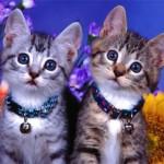 407844 gatinho2 150x150 Gatos: fotos engraçadas