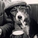 407901 16 150x150 Cachorros: fotos engraçadas