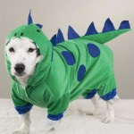 407901 32 150x150 Cachorros: fotos engraçadas