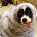 407901 62 150x150 Cachorros: fotos engraçadas