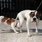 407901 7 150x150 Cachorros: fotos engraçadas