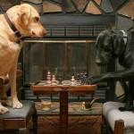 407901 74 150x150 Cachorros: fotos engraçadas