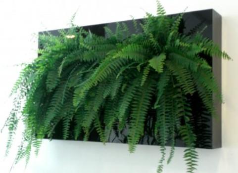 409419 Plantas para jardim vertical 2 Plantas para jardim vertical