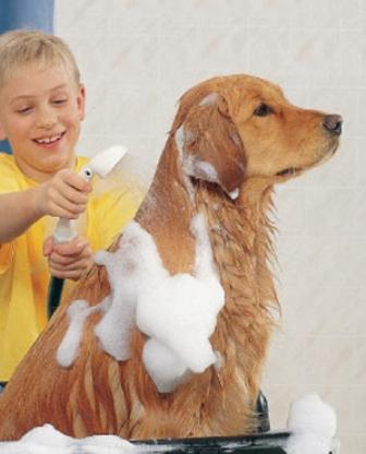 409852 Como manter seu cão sempre cheiroso Como manter seu cão sempre cheiroso