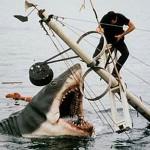 410196 Fotos de tubarões espécies tamanhos1 150x150 Fotos de tubarões: espécies, tamanhos