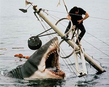 410196 Fotos de tubarões espécies tamanhos1 Fotos de tubarões: espécies, tamanhos