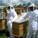 410219 Fotos de abelhas curiosidades e apicultura1 150x150 Fotos de abelhas: curiosidades e apicultura