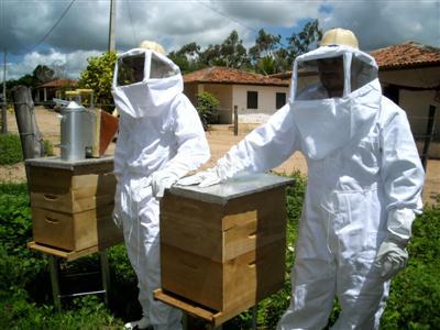 410219 Fotos de abelhas curiosidades e apicultura1 Fotos de abelhas: curiosidades e apicultura