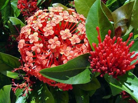 Flores para varanda de apartamento for Plantas exterior resistentes
