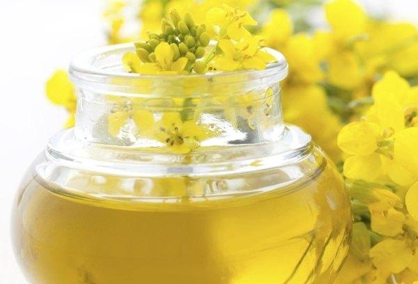 410747 O óleo de canola é o mais insaturado dos óleos Óleo de canola, girassol ou milho   Conheça as diferenças