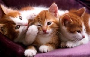 Dicas para escolher seu animal de estimação