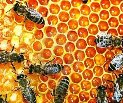 414180 A melitina é o princípio ativo extraído do veneno Botox natural de veneno de abelha