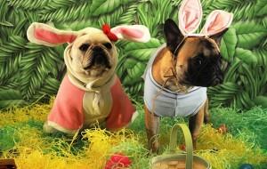 Ovo de Páscoa para cães: onde comprar