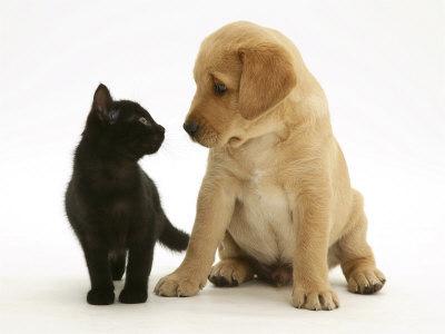 416080 Gatos agressivos como lidar3 Gatos agressivos, como lidar