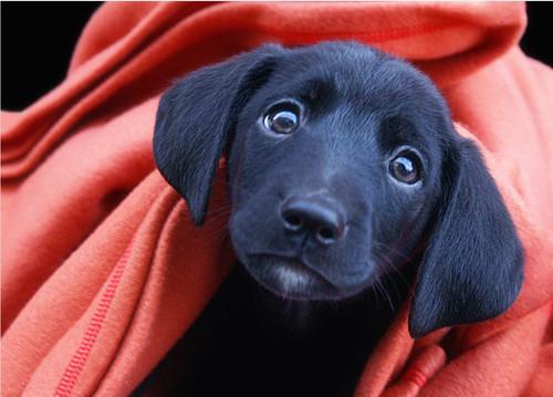 417781 photos 02 Filhotes de cachorro para adoção SP
