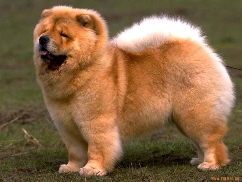 420638 cachorro 7466 Como evitar que o cão faça barulho durante a noite