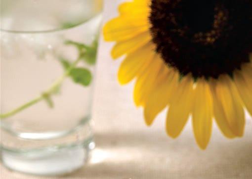 421738 As semente possuem alto teor antioxidante combatente dos radicais livres. Sementes de girassol: benefícios para a saúde