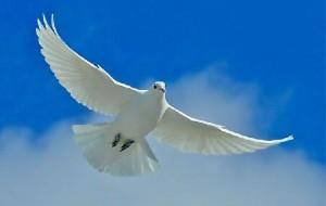 Paz: frases, mensagens bonitas